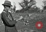 Image of apple grafting techniques United States USA, 1916, second 51 stock footage video 65675030538