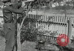 Image of apple grafting techniques United States USA, 1916, second 53 stock footage video 65675030538