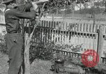 Image of apple grafting techniques United States USA, 1916, second 54 stock footage video 65675030538