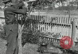 Image of apple grafting techniques United States USA, 1916, second 55 stock footage video 65675030538