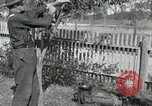 Image of apple grafting techniques United States USA, 1916, second 56 stock footage video 65675030538