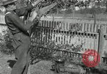 Image of apple grafting techniques United States USA, 1916, second 57 stock footage video 65675030538