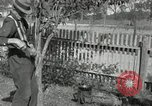 Image of apple grafting techniques United States USA, 1916, second 59 stock footage video 65675030538