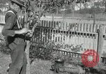 Image of apple grafting techniques United States USA, 1916, second 61 stock footage video 65675030538