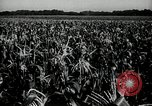 Image of Ohio agriculture and industry Ohio United States USA, 1951, second 18 stock footage video 65675030585
