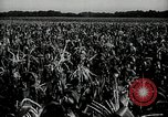 Image of Ohio agriculture and industry Ohio United States USA, 1951, second 21 stock footage video 65675030585