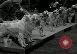Image of Dog show Madison New Jersey USA, 1934, second 8 stock footage video 65675030596