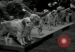 Image of Dog show Madison New Jersey USA, 1934, second 9 stock footage video 65675030596