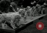 Image of Dog show Madison New Jersey USA, 1934, second 10 stock footage video 65675030596
