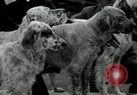 Image of Dog show Madison New Jersey USA, 1934, second 14 stock footage video 65675030596