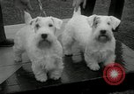 Image of Dog show Madison New Jersey USA, 1934, second 18 stock footage video 65675030596