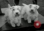 Image of Dog show Madison New Jersey USA, 1934, second 20 stock footage video 65675030596