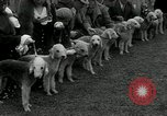 Image of Dog show Madison New Jersey USA, 1934, second 29 stock footage video 65675030596