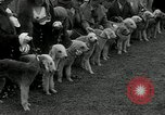 Image of Dog show Madison New Jersey USA, 1934, second 31 stock footage video 65675030596