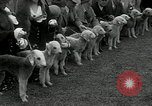 Image of Dog show Madison New Jersey USA, 1934, second 33 stock footage video 65675030596