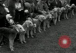 Image of Dog show Madison New Jersey USA, 1934, second 34 stock footage video 65675030596