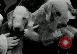 Image of Dog show Madison New Jersey USA, 1934, second 35 stock footage video 65675030596