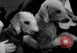 Image of Dog show Madison New Jersey USA, 1934, second 39 stock footage video 65675030596