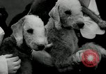 Image of Dog show Madison New Jersey USA, 1934, second 40 stock footage video 65675030596