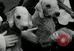 Image of Dog show Madison New Jersey USA, 1934, second 41 stock footage video 65675030596