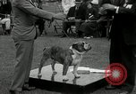 Image of Dog show Madison New Jersey USA, 1934, second 42 stock footage video 65675030596