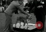 Image of Dog show Madison New Jersey USA, 1934, second 46 stock footage video 65675030596
