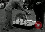 Image of Dog show Madison New Jersey USA, 1934, second 47 stock footage video 65675030596