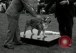 Image of Dog show Madison New Jersey USA, 1934, second 48 stock footage video 65675030596
