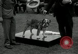 Image of Dog show Madison New Jersey USA, 1934, second 49 stock footage video 65675030596