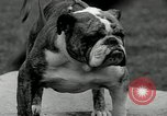 Image of Dog show Madison New Jersey USA, 1934, second 53 stock footage video 65675030596