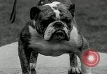 Image of Dog show Madison New Jersey USA, 1934, second 55 stock footage video 65675030596