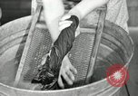 Image of Domestic chores without electricity Saint Clairsville Ohio USA, 1940, second 50 stock footage video 65675030602