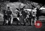 Image of P-38 planes of 80th fighter squadron Pacific Theater, 1944, second 33 stock footage video 65675030621