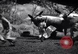 Image of P-38 planes of 80th fighter squadron Pacific Theater, 1944, second 34 stock footage video 65675030621