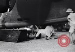 Image of B-24 dead tail gunner China, 1943, second 21 stock footage video 65675030936