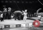Image of circus wedding New York United States USA, 1966, second 29 stock footage video 65675031162