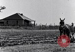 Image of mule drawn plow South Carolina United States USA, 1936, second 11 stock footage video 65675031579