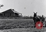 Image of mule drawn plow South Carolina United States USA, 1936, second 12 stock footage video 65675031579