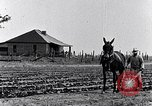 Image of mule drawn plow South Carolina United States USA, 1936, second 13 stock footage video 65675031579