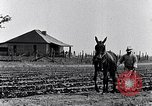 Image of mule drawn plow South Carolina United States USA, 1936, second 14 stock footage video 65675031579