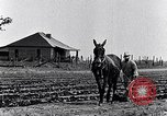 Image of mule drawn plow South Carolina United States USA, 1936, second 15 stock footage video 65675031579
