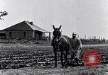 Image of mule drawn plow South Carolina United States USA, 1936, second 16 stock footage video 65675031579