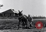 Image of mule drawn plow South Carolina United States USA, 1936, second 17 stock footage video 65675031579