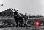 Image of mule drawn plow South Carolina United States USA, 1936, second 18 stock footage video 65675031579
