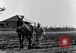 Image of mule drawn plow South Carolina United States USA, 1936, second 19 stock footage video 65675031579
