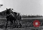Image of mule drawn plow South Carolina United States USA, 1936, second 20 stock footage video 65675031579