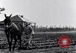Image of mule drawn plow South Carolina United States USA, 1936, second 21 stock footage video 65675031579