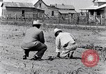Image of mule drawn plow South Carolina United States USA, 1936, second 23 stock footage video 65675031579