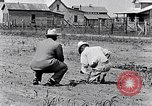 Image of mule drawn plow South Carolina United States USA, 1936, second 30 stock footage video 65675031579