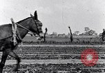 Image of mule drawn plow South Carolina United States USA, 1936, second 32 stock footage video 65675031579